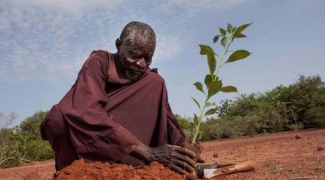 「古代の農業」で砂漠化を止めた男性