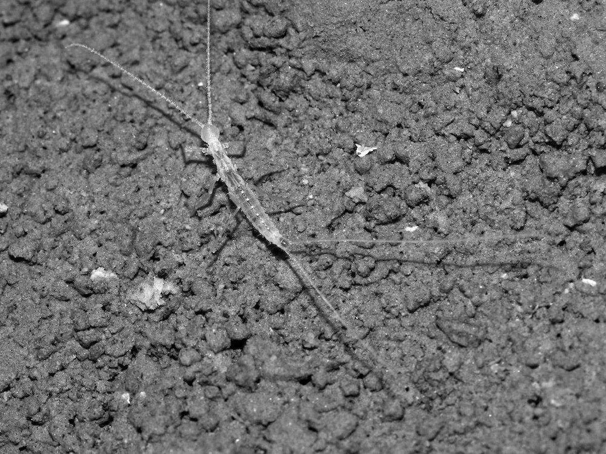 地下洞窟に生息する謎の生物が、チーズにつられて発見されるの画像 1/1