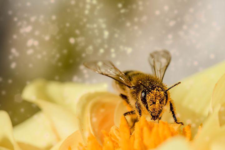 花の蜜を吸う「ハチ」