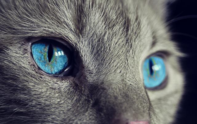 何かを見つめるネコの瞳