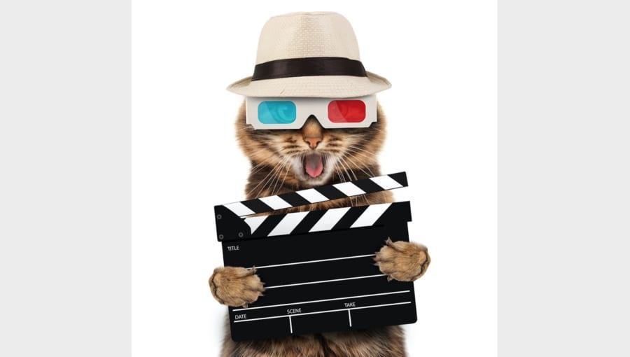 シュレーディンガーの猫の「フィルム化」に成功
