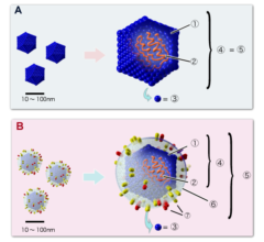 新型コロナウイルスは「免疫細胞を無効化する」という研究結果の画像 4/4