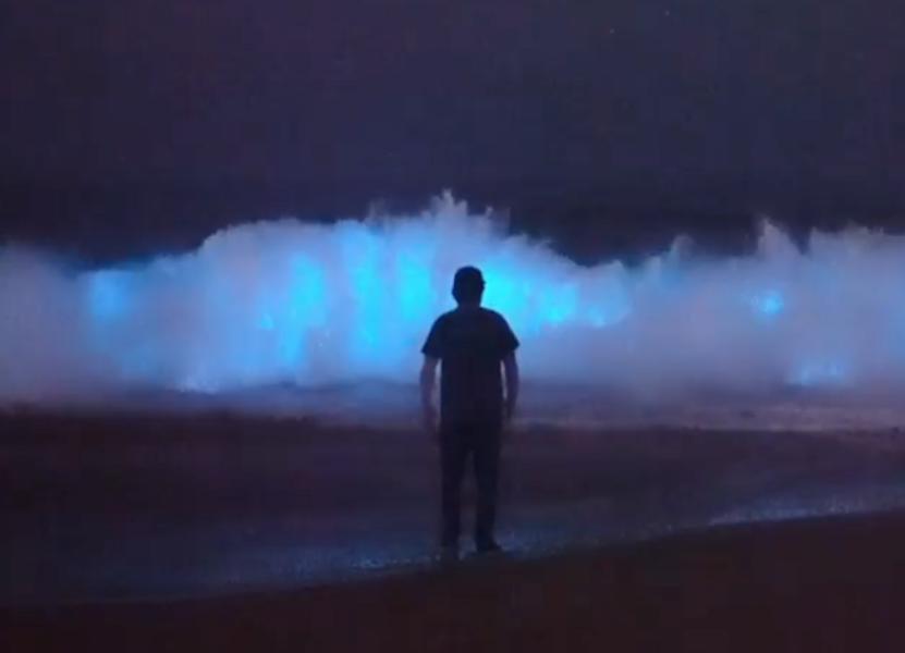 なぜ光るの? 「青く発光する海」で泳ぐファンタジックな光景が撮影される(アメリカ)