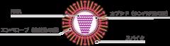 新型コロナウイルスは「免疫細胞を無効化する」という研究結果の画像 3/4