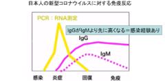 日本人は新型コロナウイルスに対して免疫を持っている可能性 低い死亡率の原因?の画像 4/6