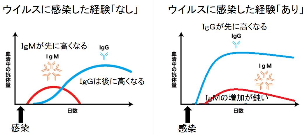 日本人は新型コロナウイルスに対して免疫を持っている可能性 低い死亡率の原因?の画像 3/6
