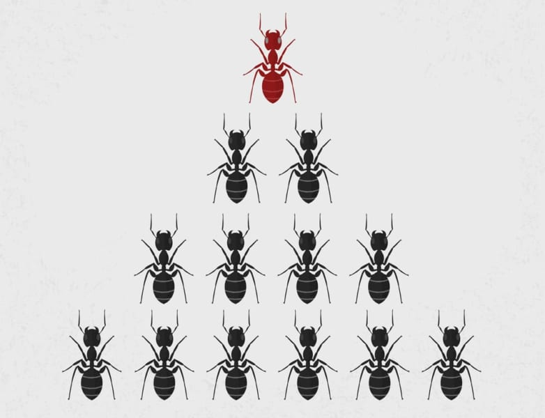 コンピュータすら能力を向上させる「アリの集合知」がすごい
