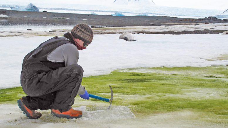 南極に緑色の雪が…?グリーンスノウ現象の原因とは