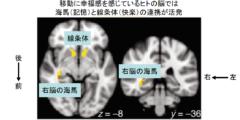 幸せの鍵は新しい場所!人の脳は「移動」を快楽と捉えていたの画像 3/4