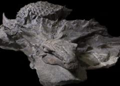 生きた姿をほぼ完全に保つ「恐竜のミイラ」がスゴイの画像 2/3