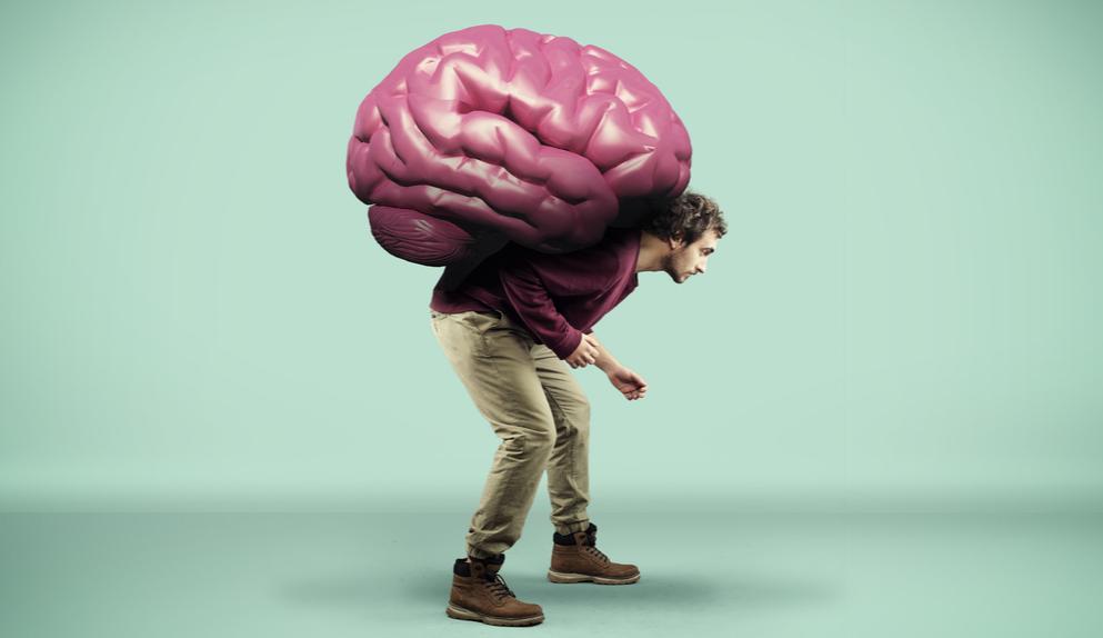 ヒトの脳を進化させた「知恵の実」遺伝子が、サルの脳を巨大化させると判明の画像 4/4