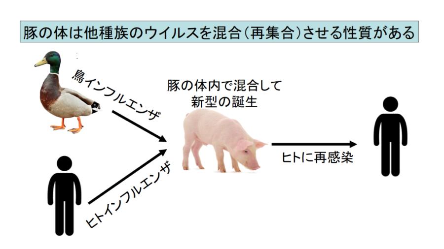中国で新型豚インフルエンザウイルスがヒトにも感染すると判明! 「ヒトからヒトへの感染は未確認」