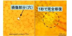 """イカのタンパク質から傷を1秒で""""自己修復する新素材""""が開発される。の画像 2/5"""