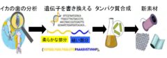 """イカのタンパク質から傷を1秒で""""自己修復する新素材""""が開発される。の画像 5/5"""