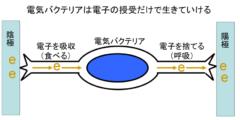 「電子だけを食べて生きる電気生命体」の生育に成功の画像 2/4