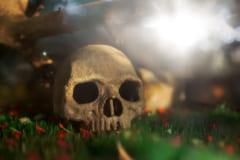 【ナゼ】盗掘された人骨がフェイスブックの闇市場で違法売買されている!?の画像 1/3