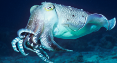 """イカのタンパク質から傷を1秒で""""自己修復する新素材""""が開発される。の画像 1/5"""