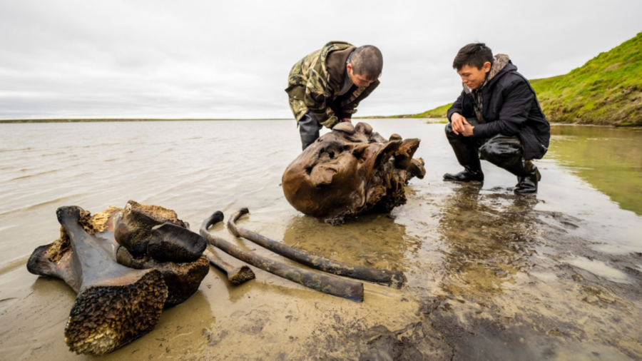 シベリアの湖で約1万年前に死んだ「巨大マンモスの頭蓋骨・肋骨・脚骨」を発見