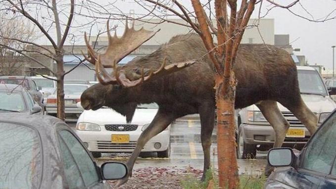 日本ではありえない巨大すぎる世界の動物10選