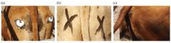 ライオンもびっくり!?ウシのお尻に「目のペイント」を描くことで捕食されにくくなる効果の画像 4/4