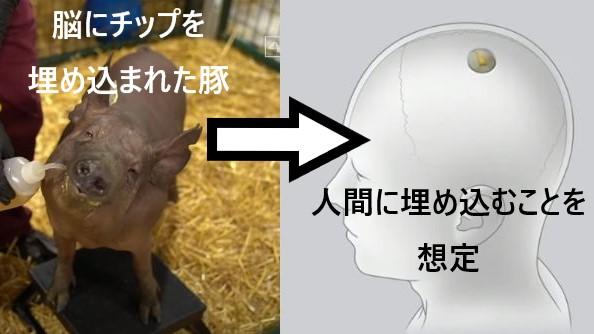 SFの世界はもうすぐ?「脳内チップ」を搭載した豚が発表される