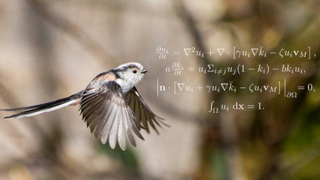 野鳥の分布にキリンのシマ模様と同じ法則が見つかる!数学者が見つけた自然界の掟「チューリングパターン」とは?