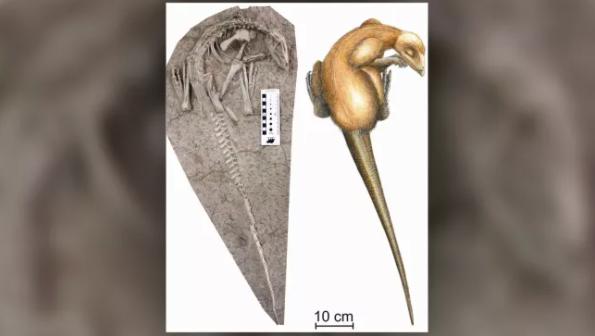 """""""眠ったまま化石になった""""1億2500万年前の新種恐竜を発見!保存状態が完璧すぎるの画像 1/3"""