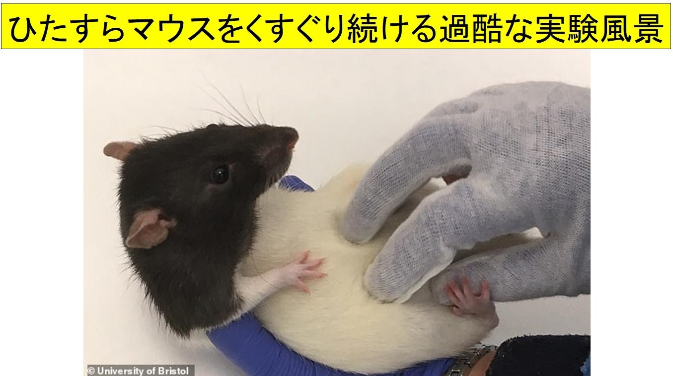 くすぐられて笑うマウス