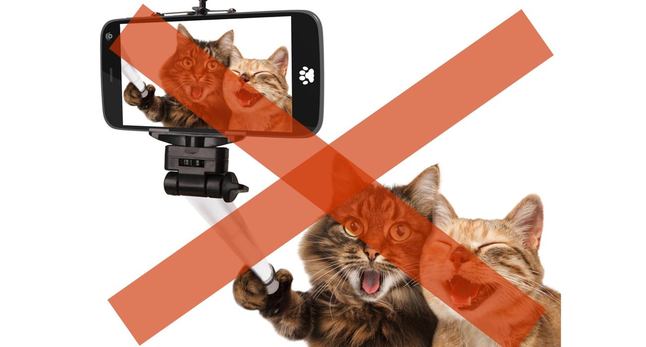 猫の「そっけない」視線が自閉症の子供にとっては大親友の条件だったの画像 3/4