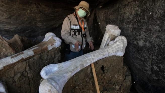 メキシコの建設地から史上最大量の「200体のマンモスの骨」が出土!