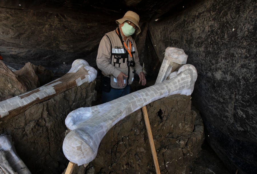 メキシコの建設地から史上最大量の「200体のマンモスの骨」が出土!の画像 2/3