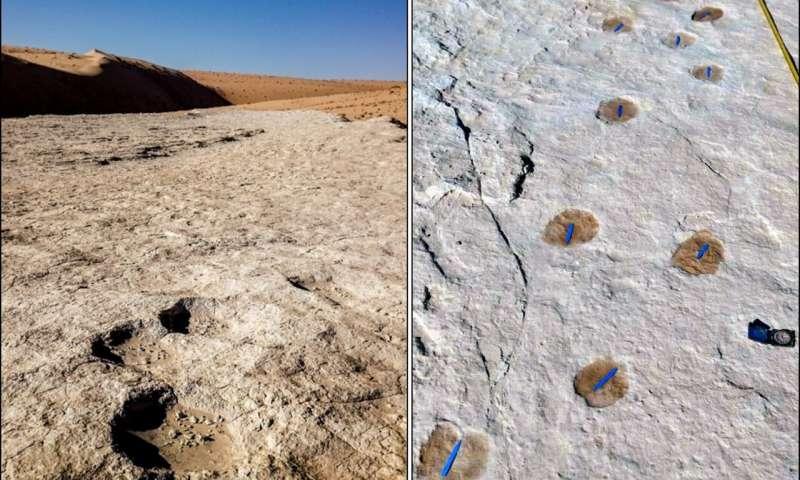 足跡、化石