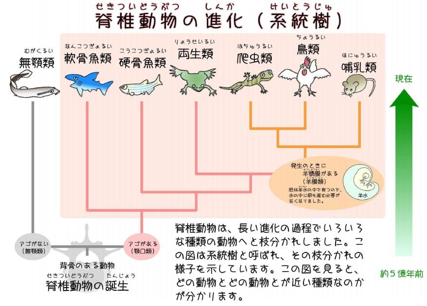 脊椎動物の進化