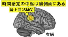 """「時間の長短」を感じる脳の部位が特定される!ナゾだった""""時が早く過ぎる日""""の原因とは?の画像 1/5"""