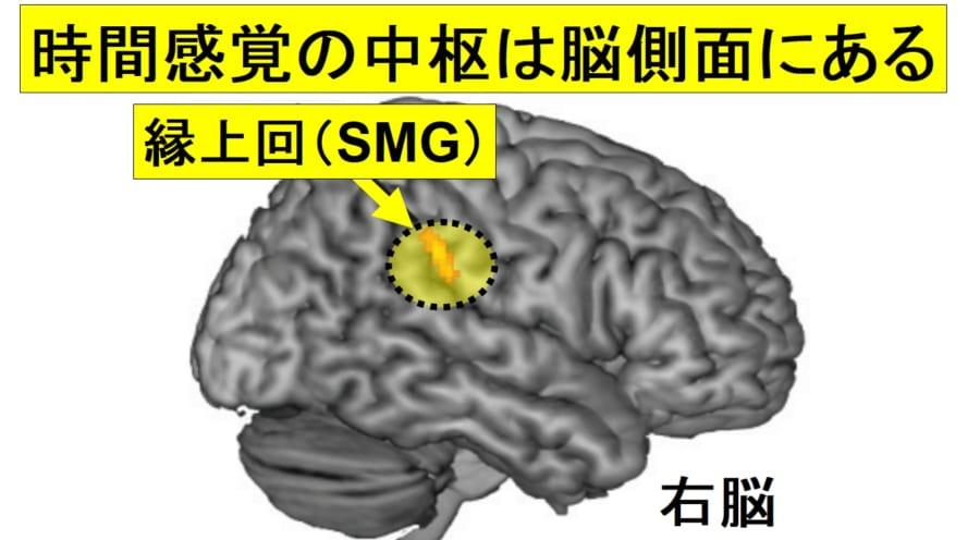 """「時間の長短」を感じる脳の部位が特定される!ナゾだった""""時が早く過ぎる日""""の原因とは?"""