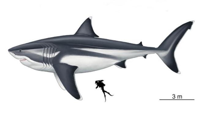 最恐モンスターサメ「メガロドン」の正確なサイズが判明!ジョーズも逃げ出すデカさだった