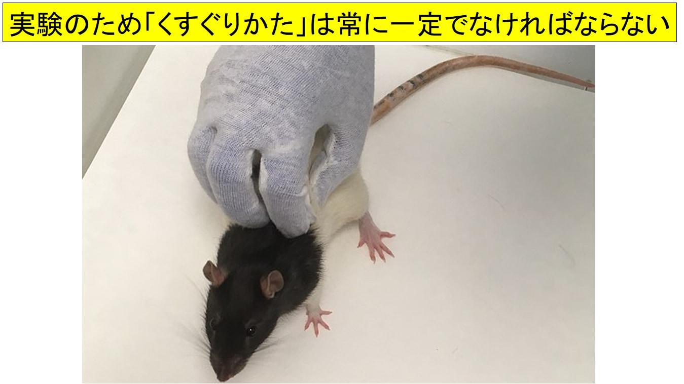 マウスはくすぐられると超音波で笑う