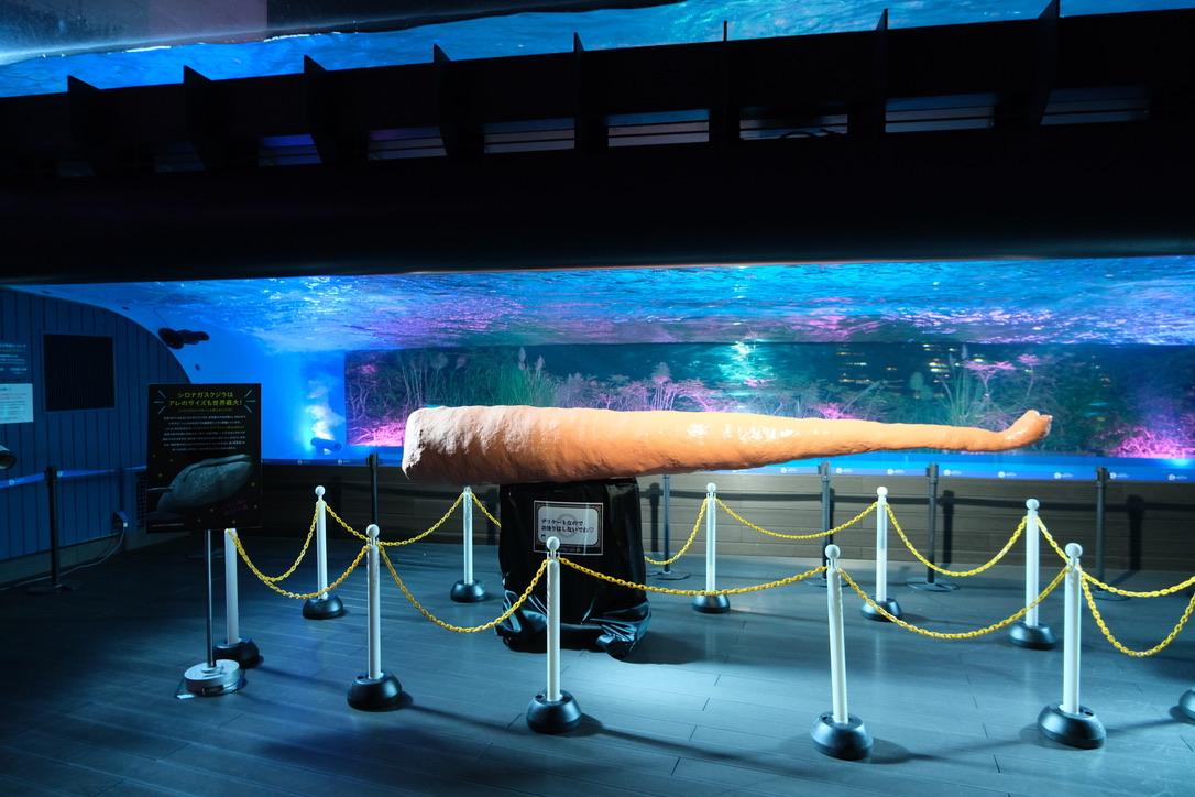 夜のサンシャイン水族館「もっと性いっぱい展」に行ってきました。真っピンク空間にドキドキ…の画像 21/21