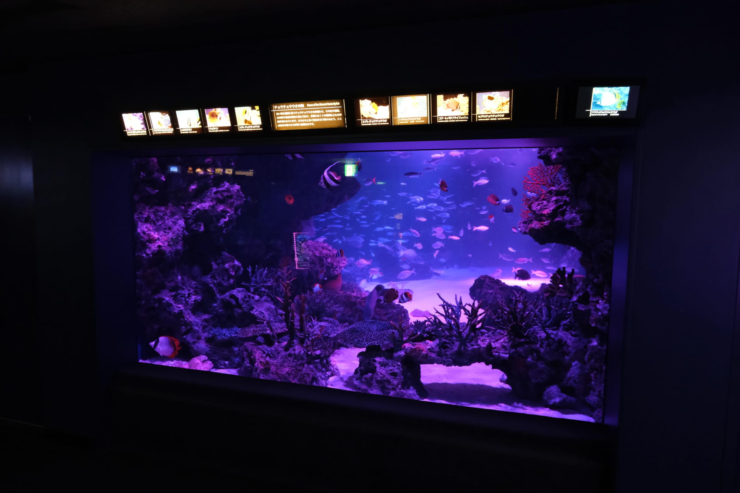 夜のサンシャイン水族館「もっと性いっぱい展」に行ってきました。真っピンク空間にドキドキ…の画像 11/21