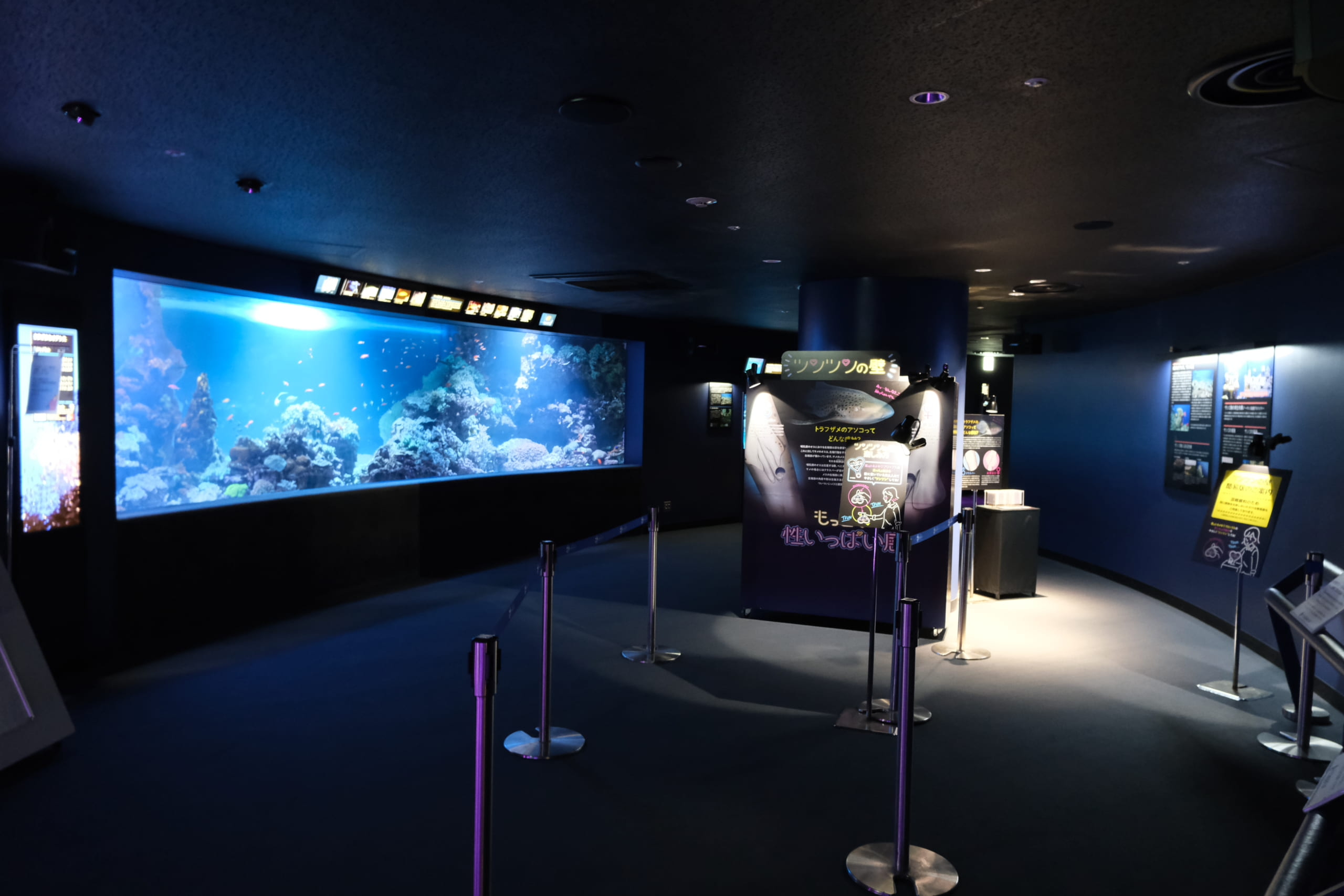 夜のサンシャイン水族館「もっと性いっぱい展」に行ってきました。真っピンク空間にドキドキ…の画像 6/21