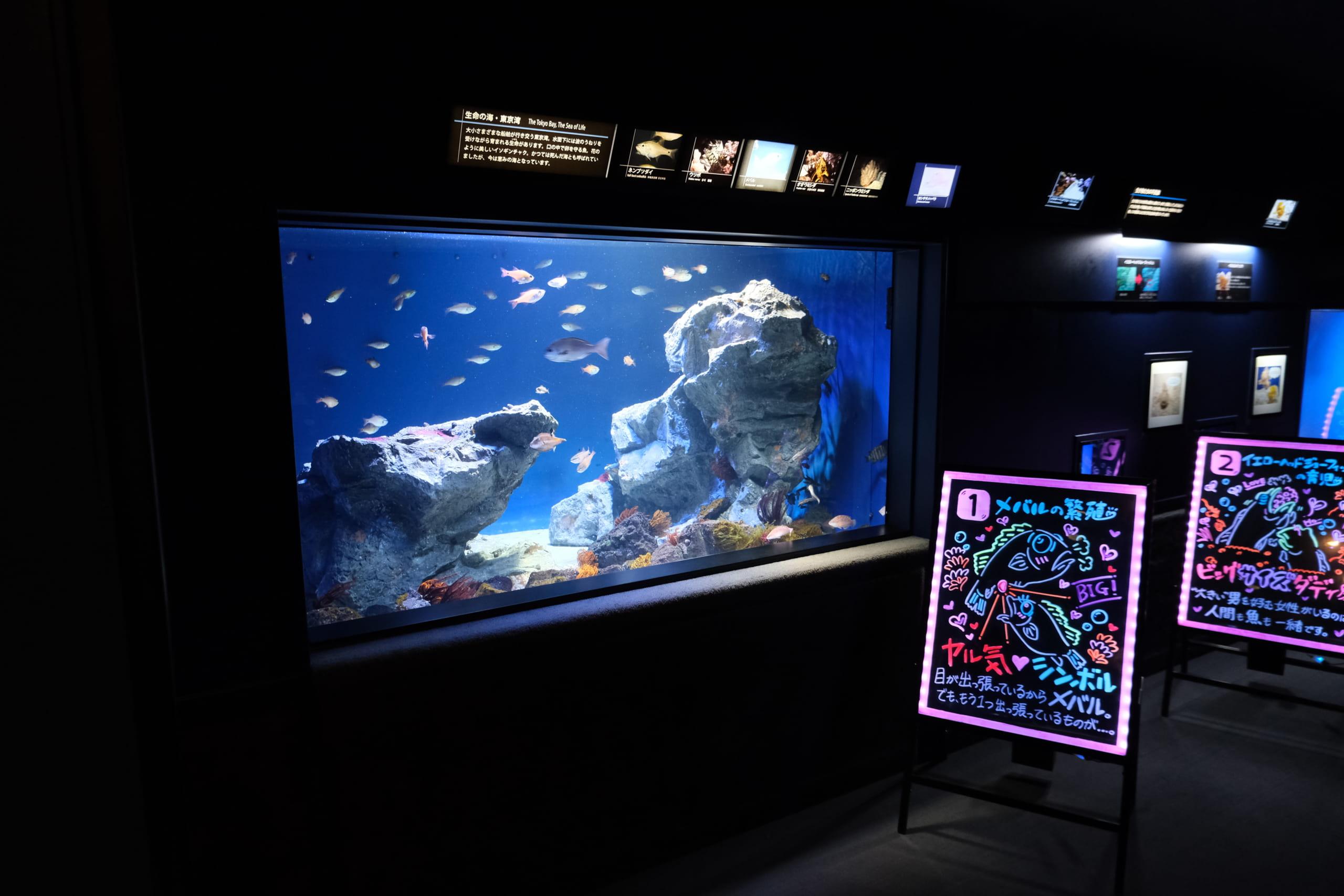 夜のサンシャイン水族館「もっと性いっぱい展」に行ってきました。真っピンク空間にドキドキ…の画像 9/21
