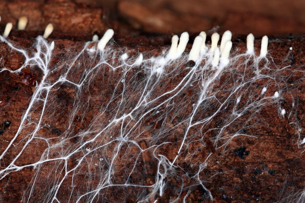 """菌類から作られる「生きた棺」が誕生!有害物質を使わずに、""""遺体をすばやく自然に帰す""""の画像 2/5"""