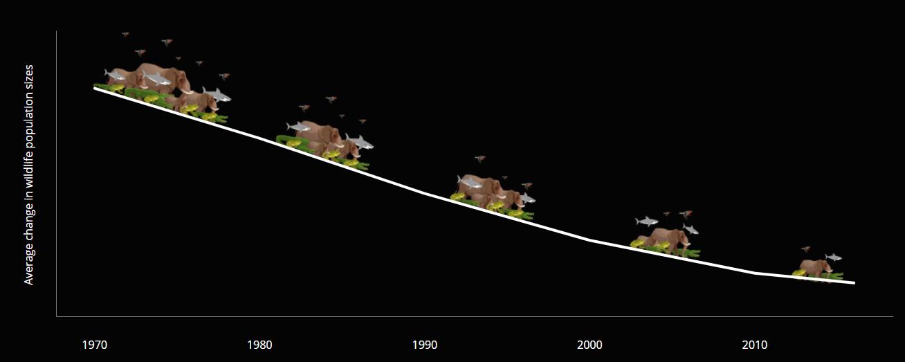 この50年で野生動物の数は平均68%も減少していたの画像 2/5