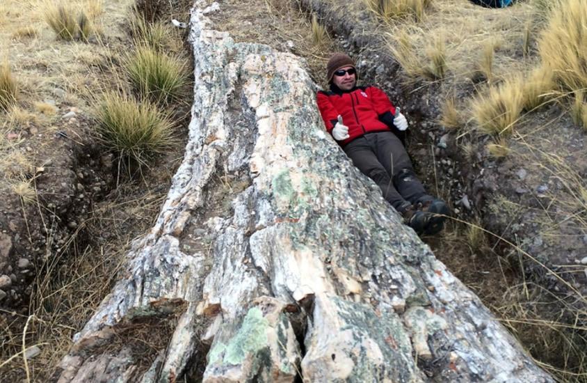 ペルーで発見された1000万年前の「巨木の化石」から、既存の古代気候モデルの予想と異なる証拠が見つかる!
