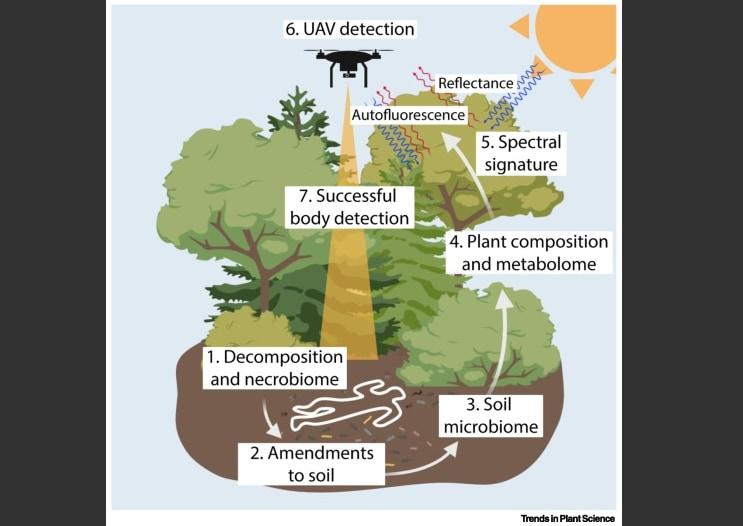 """「植物の変化」から""""森に隠された死体""""を発見する研究の画像 3/4"""