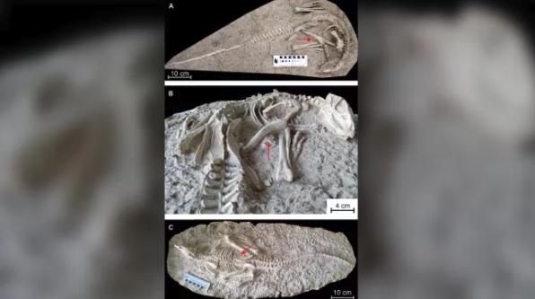 """""""眠ったまま化石になった""""1億2500万年前の新種恐竜を発見!保存状態が完璧すぎるの画像 2/3"""