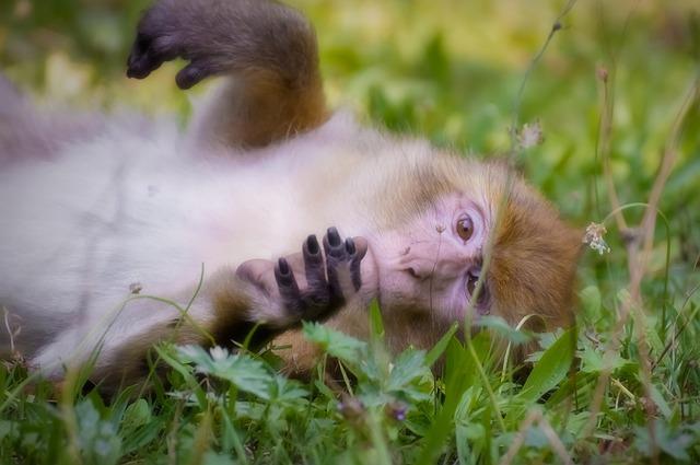 この50年で野生動物の数は平均68%も減少していたの画像 1/5