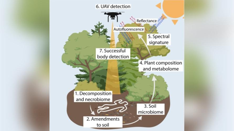 """「植物の変化」から""""森に隠された死体""""を発見する研究"""