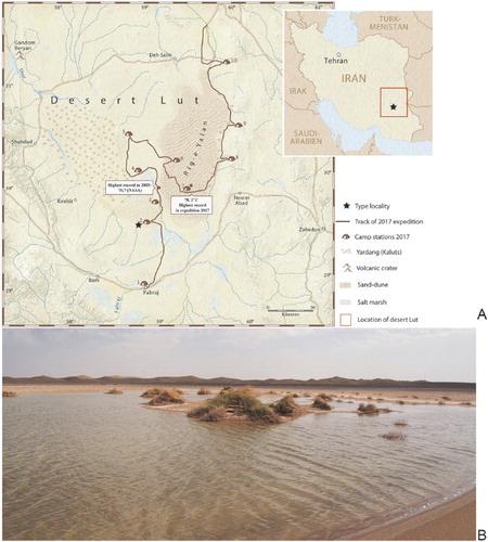 """最高気温80℃の""""地球一暑い砂漠""""で、新種の「純白の甲殻類」が発見されるの画像 3/3"""