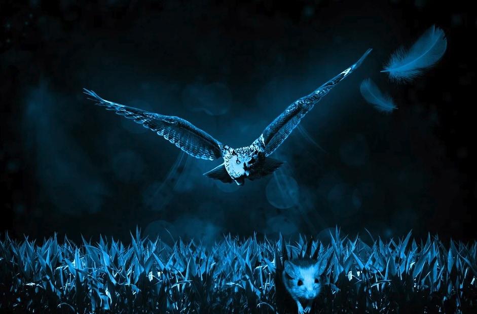 フクロウの目は「夜行性の霊長類」に近い